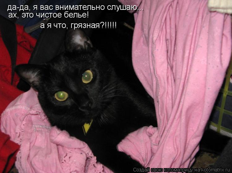 Котоматрица: да-да, я вас внимательно слушаю...  ах, это чистое белье! а я что, грязная?!!!!!