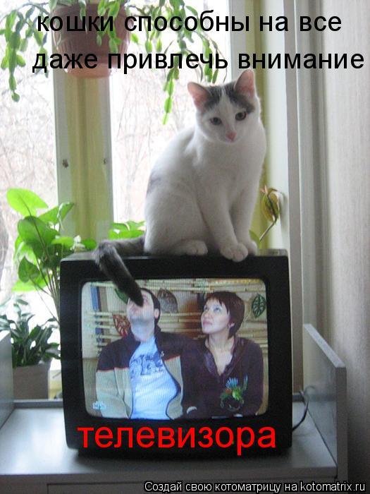 Котоматрица: кошки способны на все  даже привлечь внимание телевизора