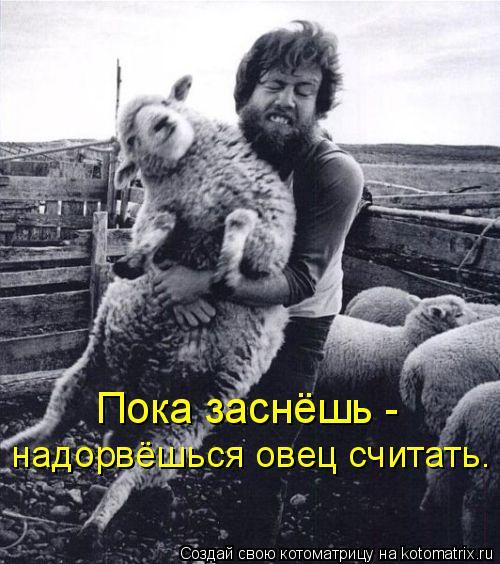 Котоматрица: Пока заснёшь -  надорвёшься овец считать.