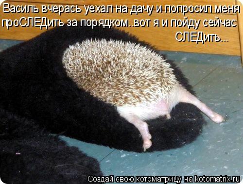 Котоматрица: Василь вчерась уехал на дачу и попросил меня проСЛЕДить за порядком..вот я и пойду сейчас СЛЕДить...