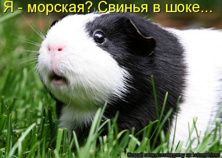 Котоматрица: Я - морская? Свинья в шоке...