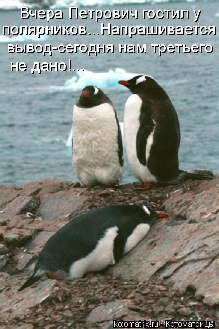 Котоматрица: Вчера Петрович гостил у  полярников...Напрашивается  вывод-сегодня нам третьего  не дано!...