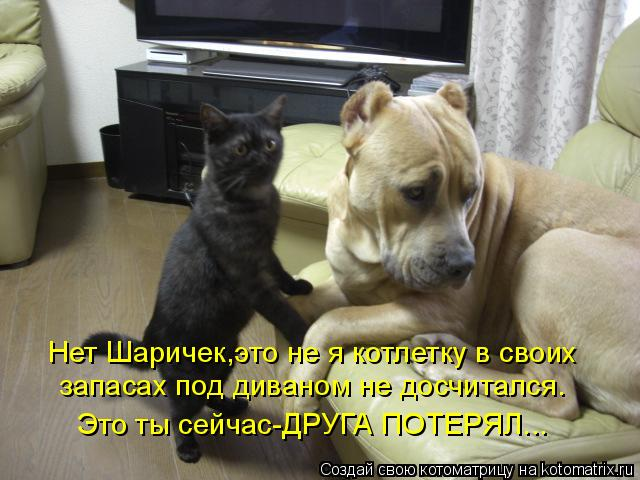 Котоматрица: Нет Шаричек,это не я котлетку в своих запасах под диваном не досчитался. Это ты сейчас-ДРУГА ПОТЕРЯЛ...