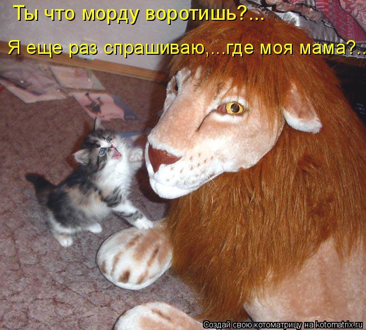 Котоматрица - Ты что морду воротишь?... Я еще раз спрашиваю,...где моя мама?...