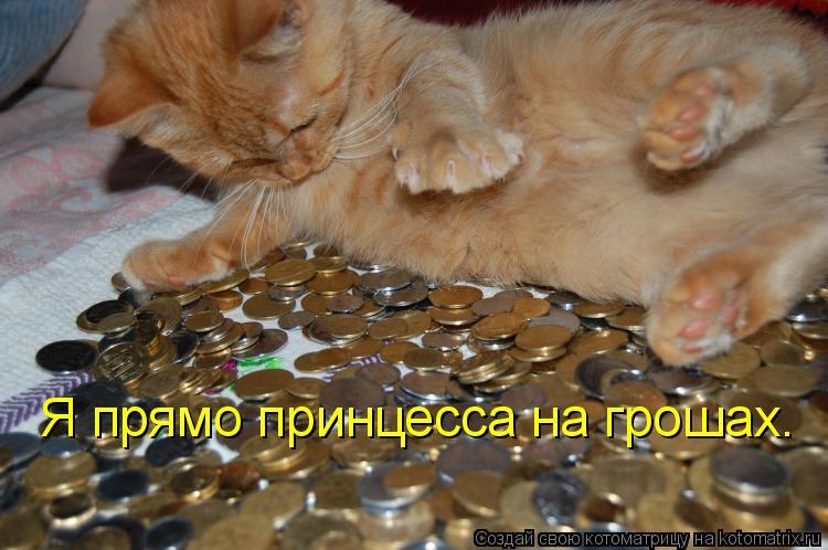 Котоматрица: Я прямо принцесса на грошах.