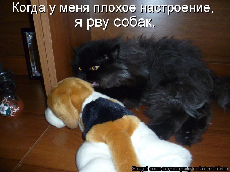 Котоматрица: Когда у меня плохое настроение,  я рву собак.
