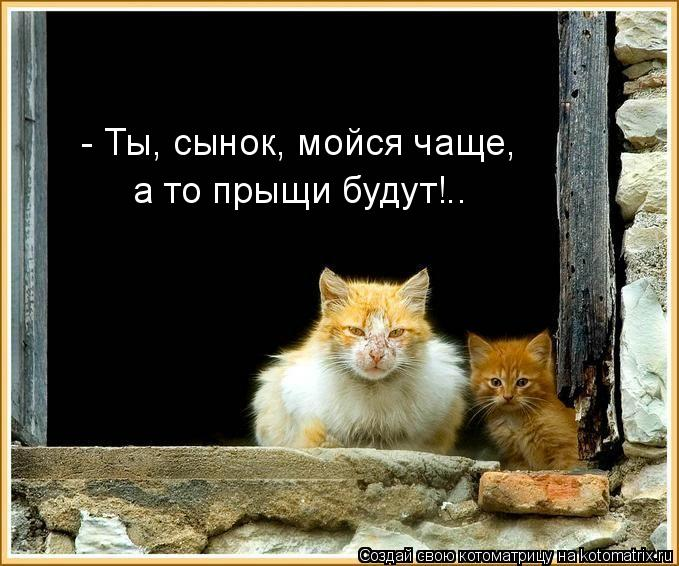 Котоматрица: - Ты, сынок, мойся чаще, а то прыщи будут!..