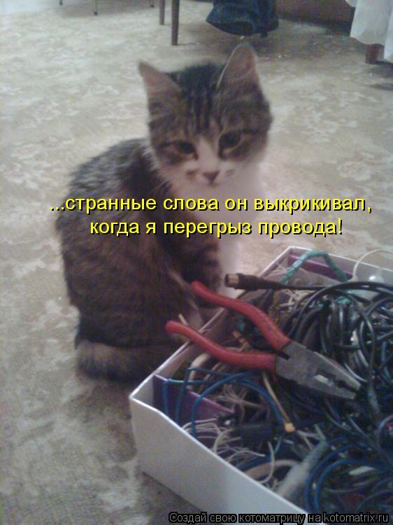 Котоматрица: ...странные слова он выкрикивал, когда я перегрыз провода!