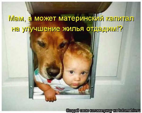 Котоматрица: Мам, а может материнский капитал на улучшение жилья отдадим!?