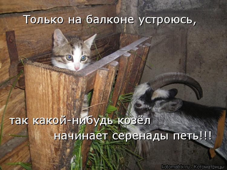 Котоматрица: Только на балконе устроюсь, так какой-нибудь козёл  начинает серенады петь!!!