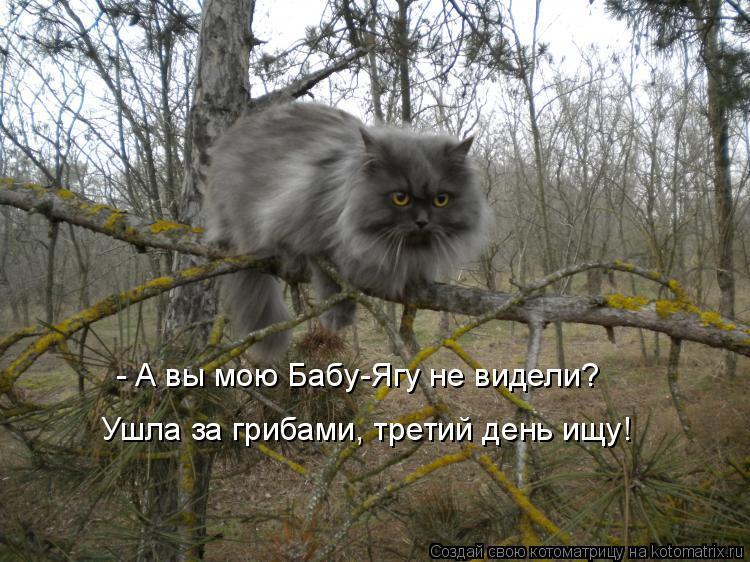 Котоматрица - - А вы мою Бабу-Ягу не видели? Ушла за грибами, третий день ищу!