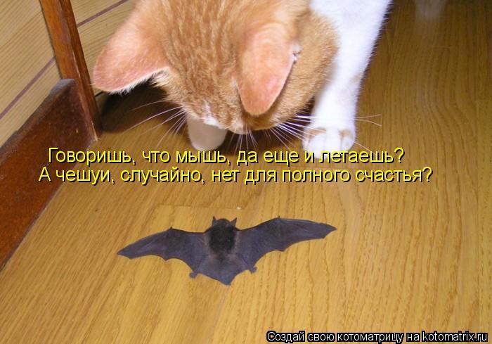 Котоматрица: Говоришь, что мышь, да еще и летаешь? А чешуи, случайно, нет для полного счастья?