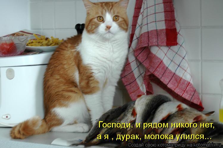 Котоматрица: Господи. и рядом никого нет,  а я , дурак, молока упился...
