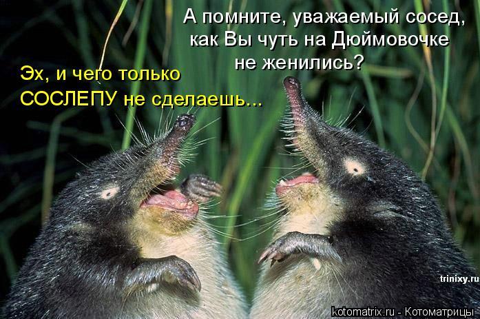 Котоматрица: А помните, уважаемый сосед, как Вы чуть на Дюймовочке не женились? Эх, и чего только  СОСЛЕПУ не сделаешь...