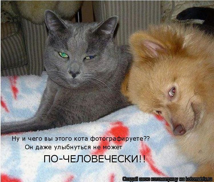 Котоматрица: Ну и чего вы этого кота фотографируете?? Он даже улыбнуться не может ПО-ЧЕЛОВЕЧЕСКИ!!
