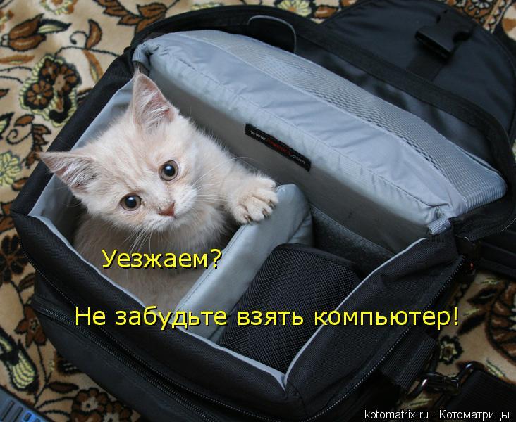 Котоматрица: Уезжаем? Не забудьте взять компьютер!