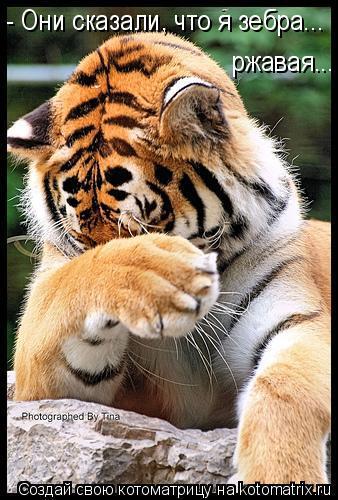 Котоматрица: - Они сказали, что я зебра... ржавая...