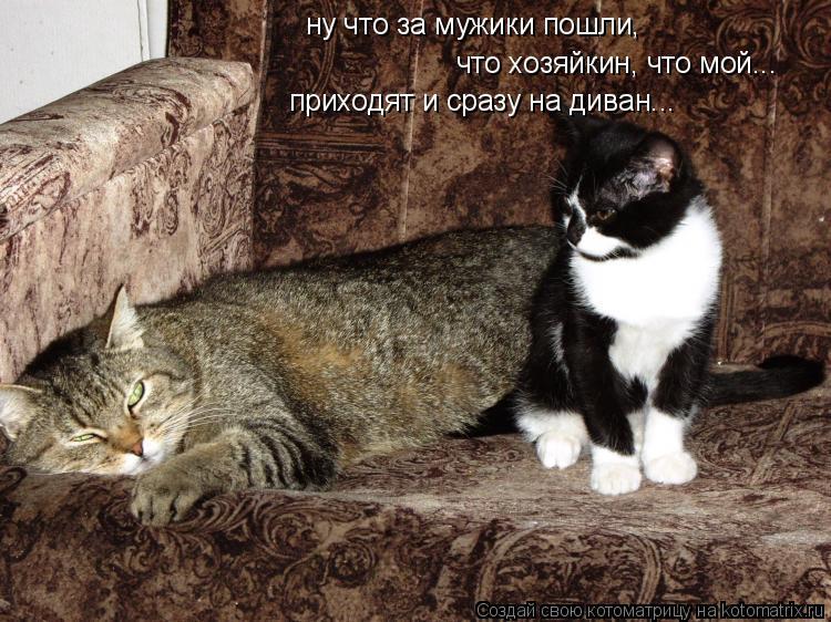Котоматрица: ну что за мужики пошли, что хозяйкин, что мой... приходят и сразу на диван...