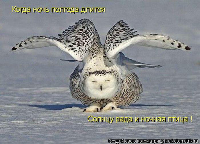Котоматрица: Когда ночь полгода длится Солнцу рада и ночная птица !