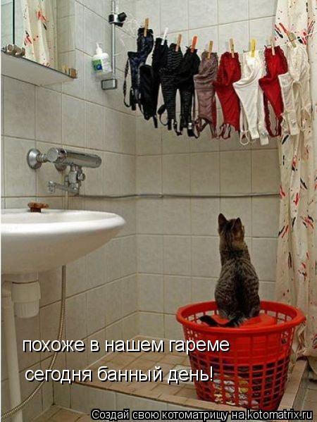 Котоматрица: похоже в нашем гареме сегодня банный день!