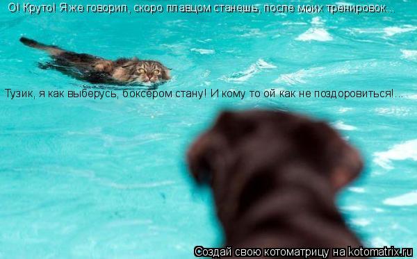 Котоматрица: О! Круто! Я же говорил, скоро плавцом станешь, после моих тренировок... Тузик, я как выберусь, боксёром стану! И кому то ой как не поздоровиться