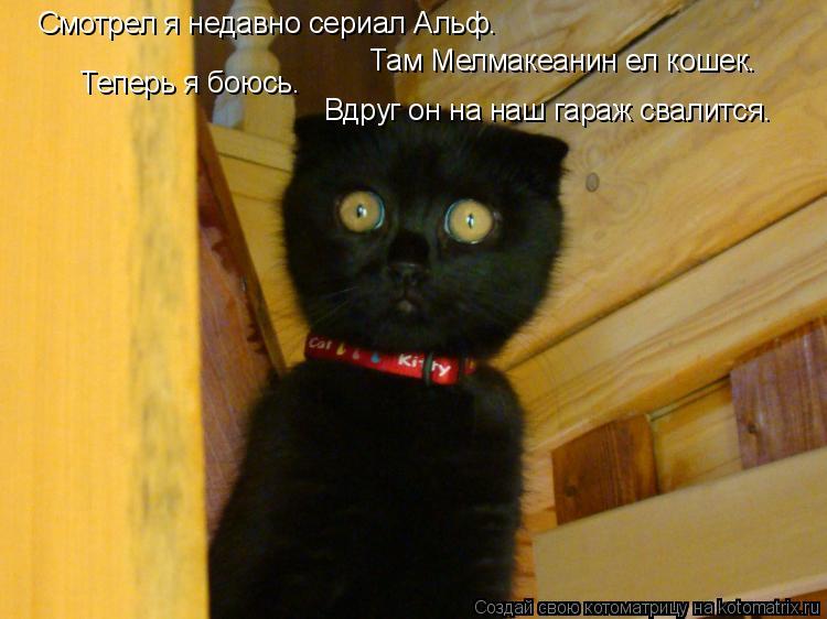 Котоматрица: Смотрел я недавно сериал Альф. Там Мелмакеанин ел кошек. Теперь я боюсь. Вдруг он на наш гараж свалится.