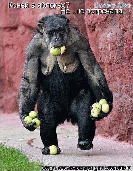 Котоматрица: Коней в яблоках? Не...не встречала...
