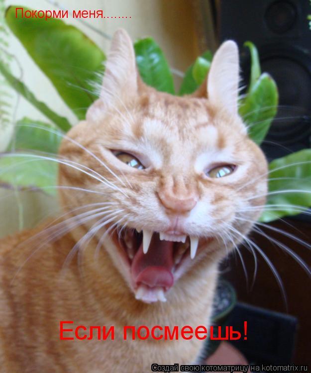 Котоматрица: Покорми меня........ Если посмеешь!