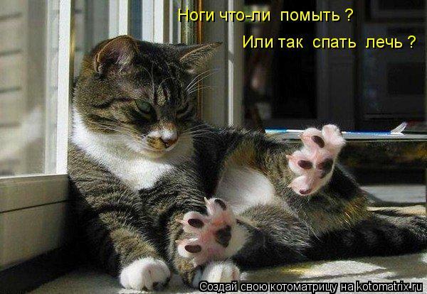 Котоматрица: Ноги что-ли  помыть ? Или так  спать  лечь ?