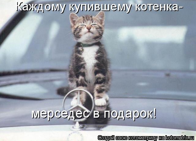 Котоматрица: Каждому купившему котенка-  мерседес в подарок!