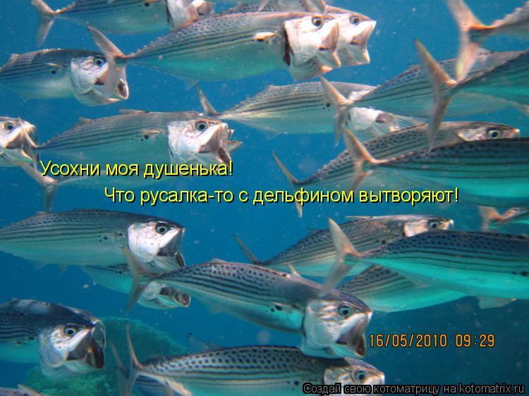 Котоматрица: Усохни моя душенька!  Что русалка-то с дельфином вытворяют!