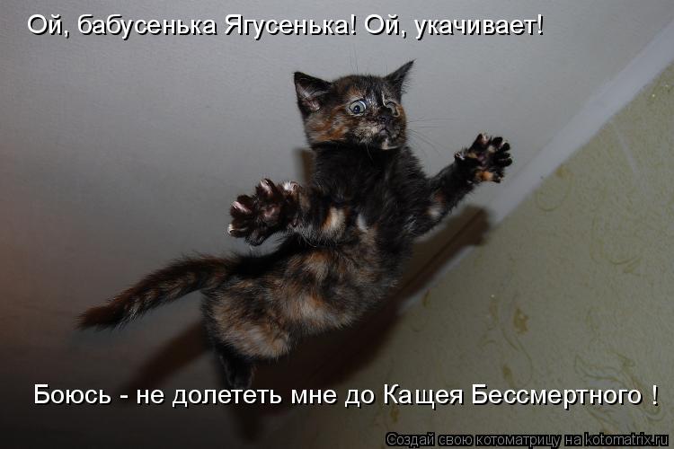 Котоматрица: Ой, бабусенька Ягусенька! Ой, укачивает! Боюсь - не долететь мне до Кащея Бессмертного !