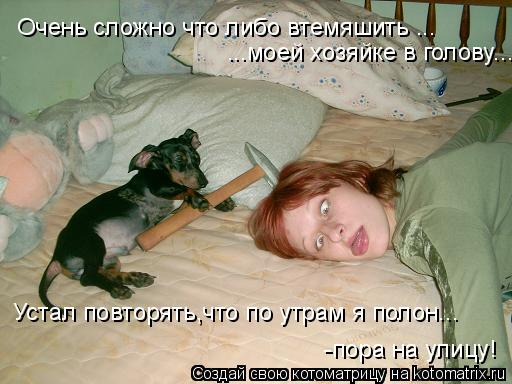Котоматрица: Очень сложно что либо втемяшить ... ...моей хозяйке в голову... Устал повторять,что по утрам я полон... -пора на улицу!