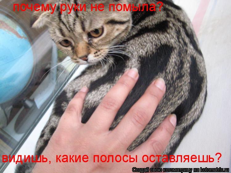 Котоматрица: почему руки не помыла? видишь, какие полосы оставляешь?