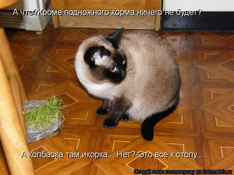 Котоматрица: А что?Кроме подножного корма ничего не будет? А колбаска там,икорка....Нет?-Это всё к столу.....