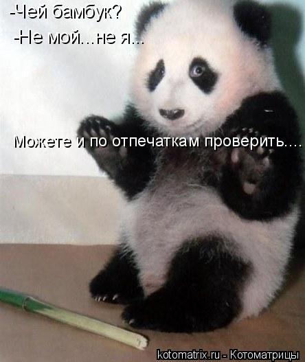 Котоматрица: -Чей бамбук? -Не мой...не я... Можете и по отпечаткам проверить....