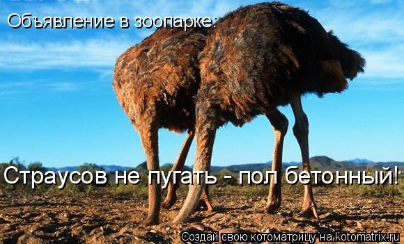 Котоматрица: Страусов не пугать - пол бетонный! Объявление в зоопарке: