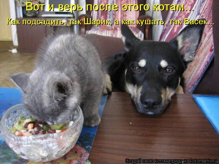 Котоматрица: Вот и верь после этого котам... Как подсадить, так Шарик, а как кушать, так Васек...