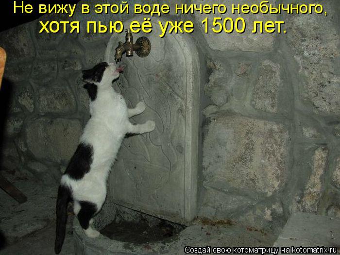 Котоматрица: Не вижу в этой воде ничего необычного,  хотя пью её уже 1500 лет.
