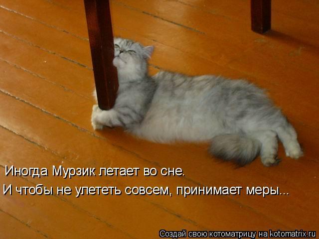 Котоматрица: Иногда Мурзик летает во сне.  И чтобы не улететь совсем, принимает меры...