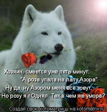 """Котоматрица: Хозяин, смеется уже пять минут: """"А роза упала на лапу Азора"""" Ну да, ну Азором меня все зовут, Но розу я пОднял. Так в чем же умора?"""