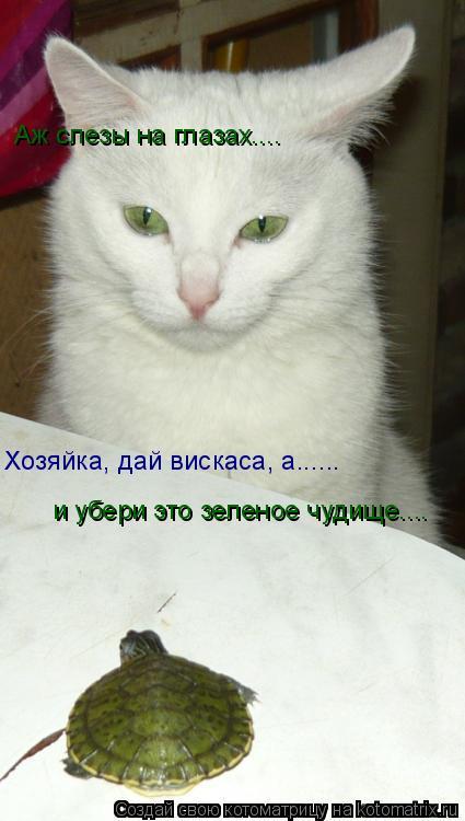 Котоматрица: Аж слезы на глазах.... Хозяйка, дай вискаса, а...... и убери это зеленое чудище....