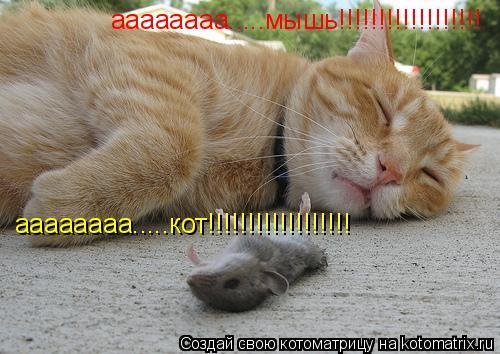 Котоматрица: аааааааа.....кот!!!!!!!!!!!!!!!!!! аааааааа.....мышь!!!!!!!!!!!!!!!!!!