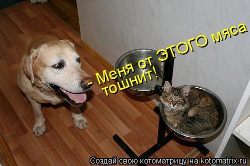 Котоматрица: - Меня от ЭТОГО мяса тошнит!