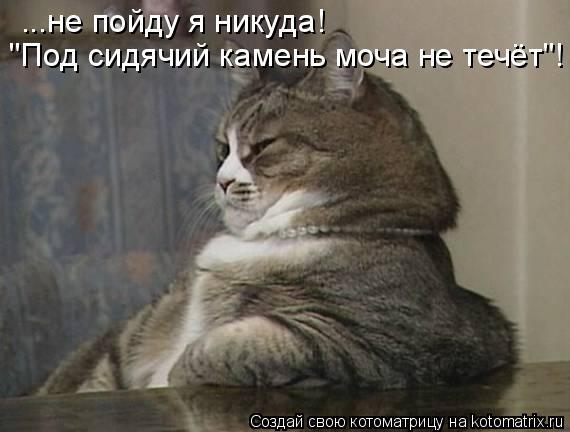 "Котоматрица: ...не пойду я никуда! ""Под сидячий камень моча не течёт""!"