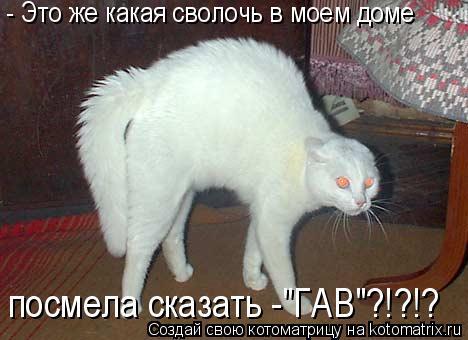 http://kotomatrix.ru/images/lolz/2010/06/04/593559.jpg