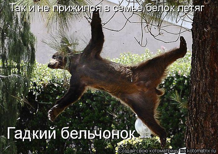 Котоматрица: Так и не прижился в семье белок летяг Гадкий бельчонок