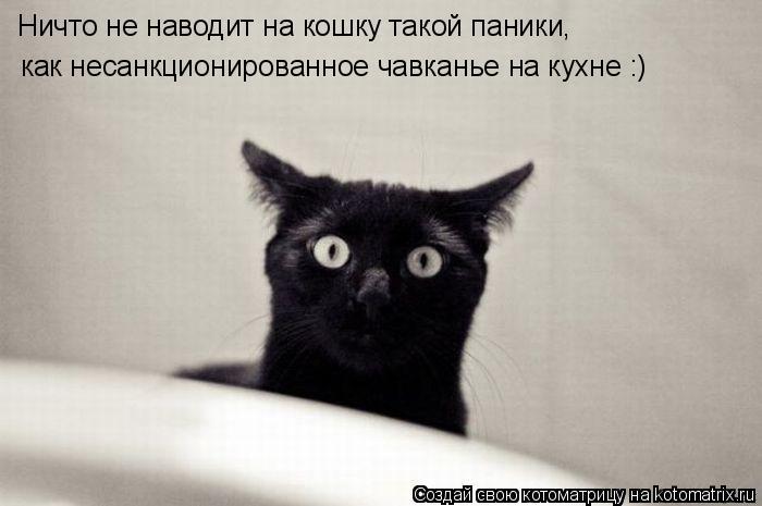 Котоматрица: Ничто не наводит на кошку такой паники, как несанкционированное чавканье на кухне :)