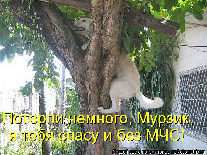 Котоматрица: Потерпи немного, Мурзик,  я тебя спасу и без МЧС!
