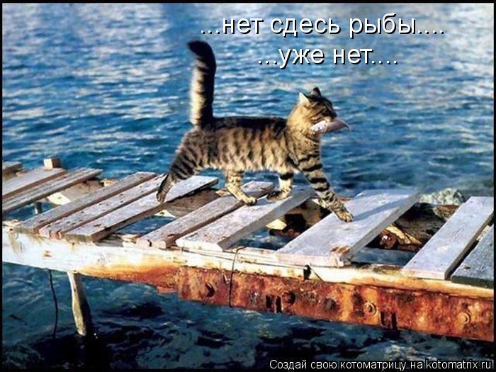 Котоматрица: ...нет сдесь рыбы.... ...уже нет....